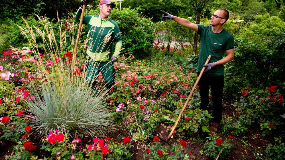 Zwei Landschaftsgärtner besprechen weitere Arbeitsschritte.